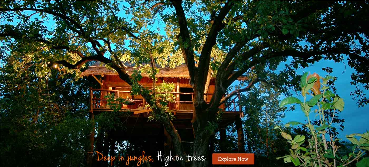 Tree House Photos Luxury Wildlife Resorts Hotel In Bandhavgarh National Park